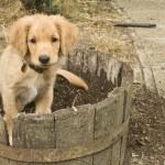 Amos digging pot